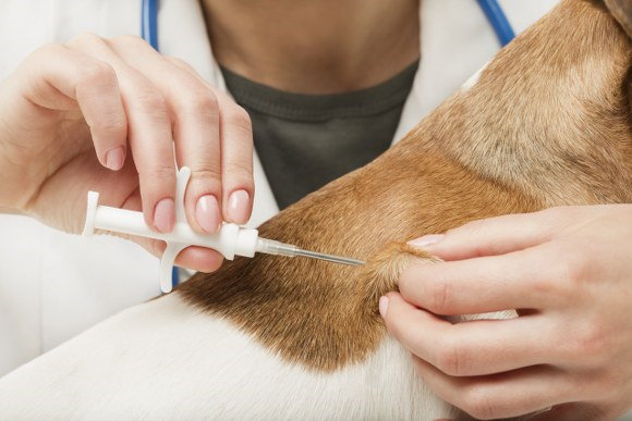microchipping pets before removals