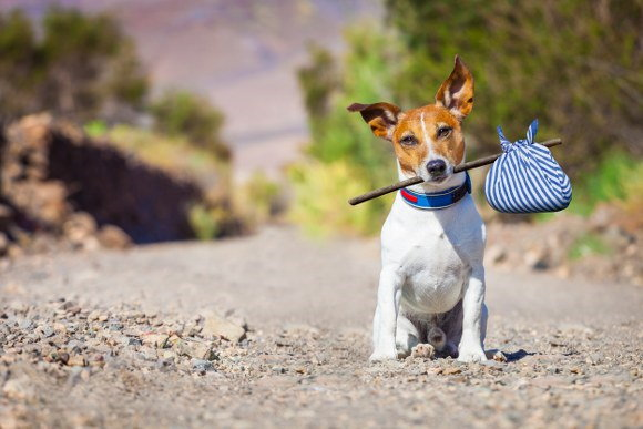 moving home with your pet